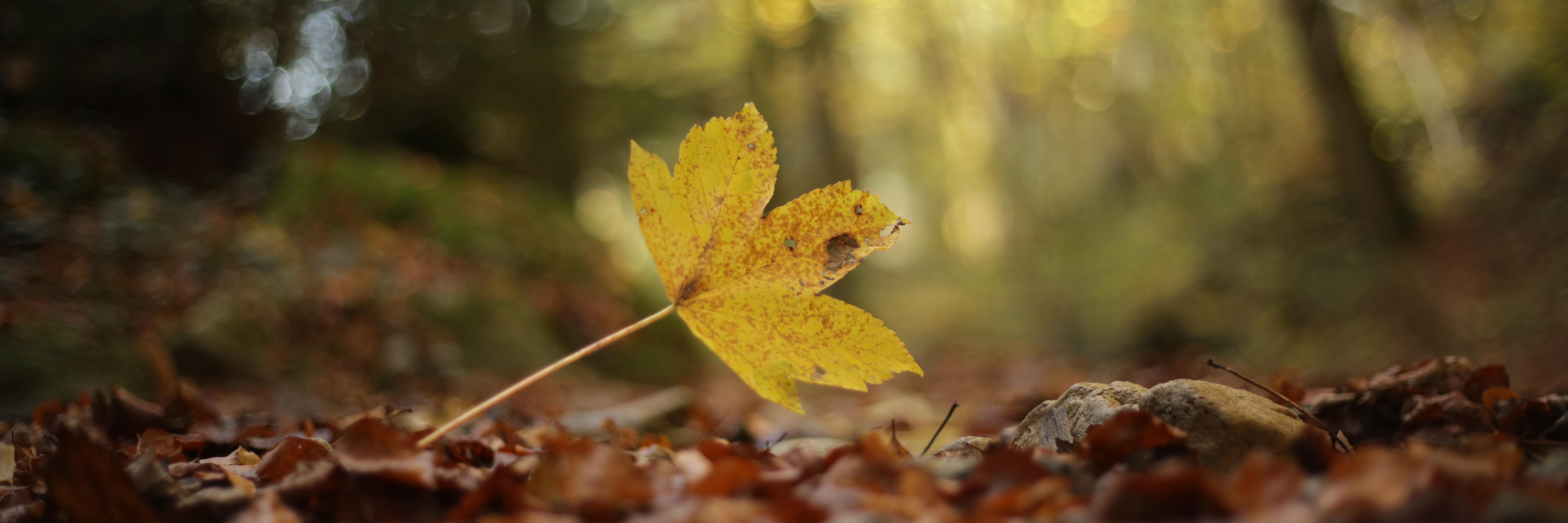 Permalink auf:Forest